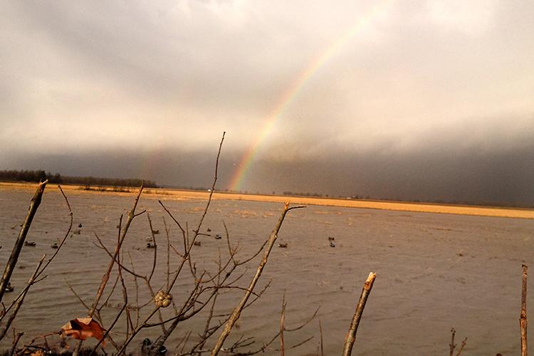 rainbow-duck-hunt-2015